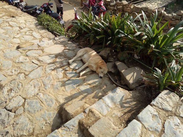 Cat_Cat_Village-04