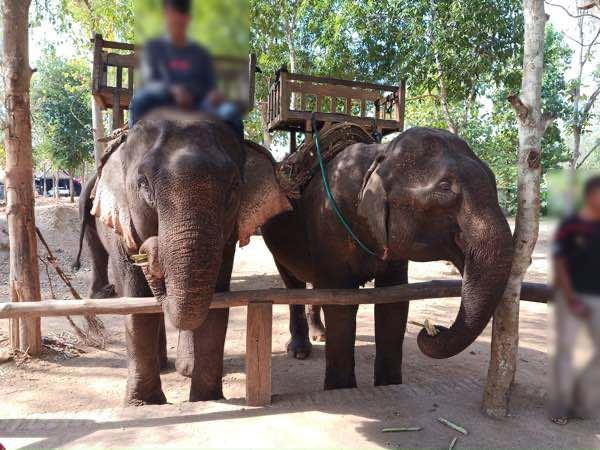laos-luang-prabang-Dec-2019-136