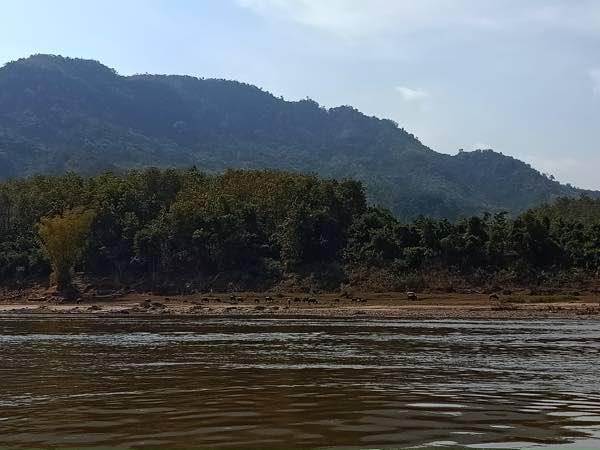 laos-luang-prabang-Dec-2019-184